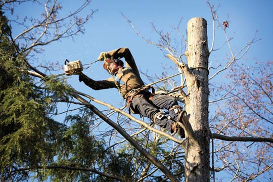 Napier Tree Service - Tree Service - Charlestown, IN - Thumb 2