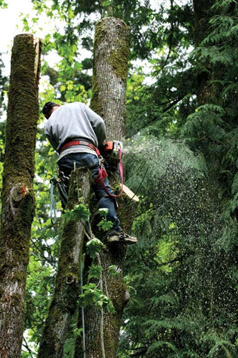 Napier Tree Service - Tree Service - Charlestown, IN - Thumb 3